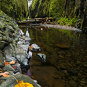 Oneonta Gorge is a beautiful narrow split in the cliffs of the Columbia River Gorge. Oneonta creek flows through the gorge from Oneonta falls.