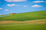 Crop duster aircraft over wheat fields in the Palouse area of eastern Washington state. The Palouse is a region of the northwestern United States, encompassing parts of southeastern Washington, north central Idaho and, in some definitions, extending south into northeast Oregon. It is a major agricultural area, primarily producing wheat and legumes.