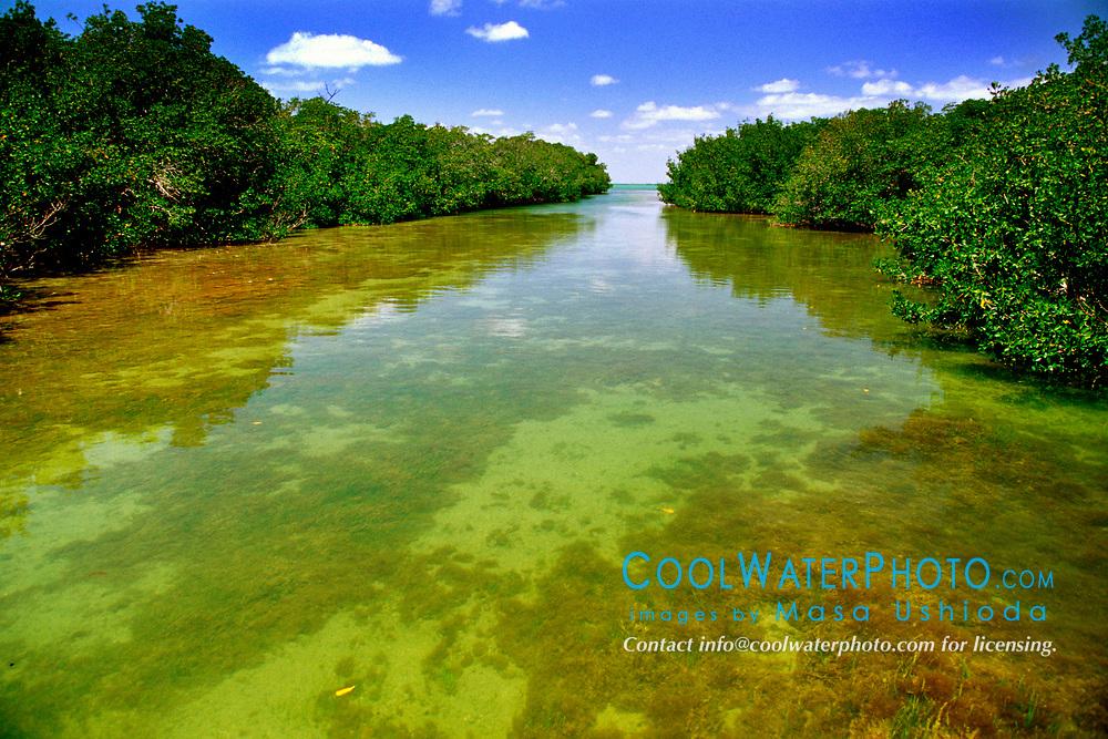 red mangroves, Rhizophora mangle, Blackwater Sound, Florida Bay, Everglades National Park, Florida, USA