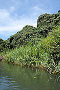 South Pacific, The Republic of Vanuatu, Shefa Provence, Epule River Valley