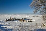 Barlow Moor, Derbyshire in the snow