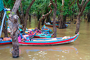 Women wait to give tourists boat rides through the flooded forest south of Kampong Phluk, Cambodia.