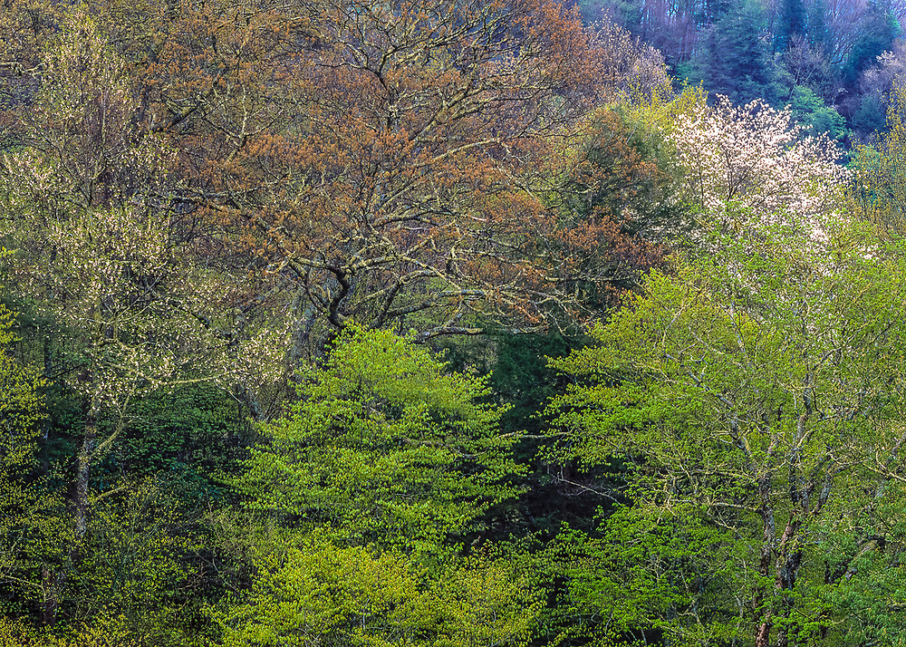 Spring forest design, near Newfound Gap, Great Smoky Mountains National Park, Tennessee, USA
