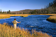 Fly-fisherman working a bend in the Madison River, near West Yellowstone, Yellowstone National Park, Wyoming