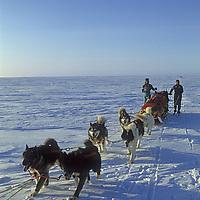INTERNATIONAL ARCTIC PROJECT. Julie Hansen & Takano Takako (MR) mush along Arctic coast in Canada's Northwest Territories