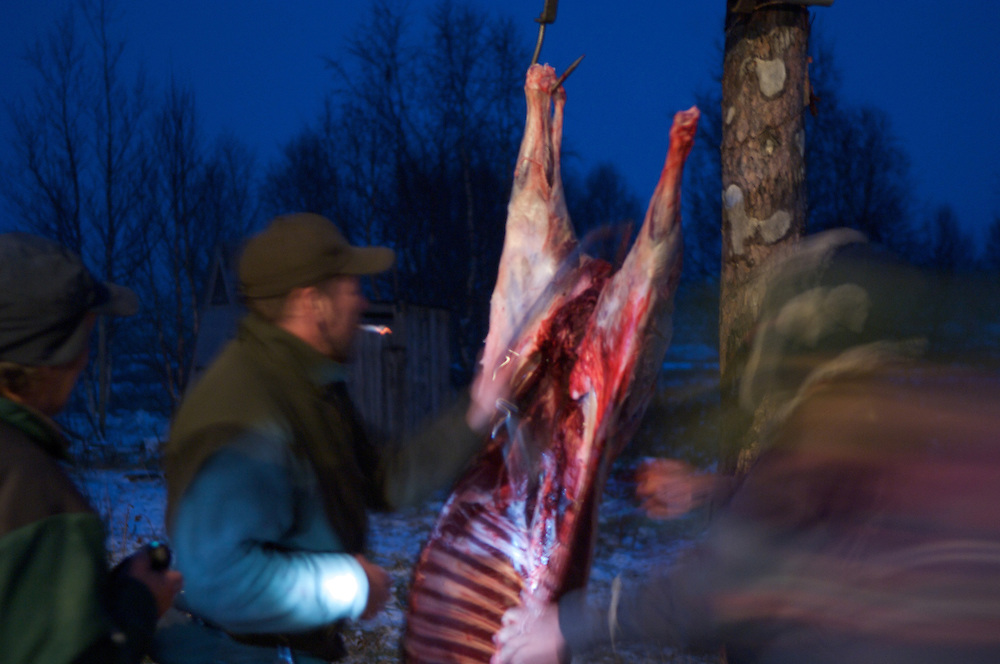 Hirvas Salmi, FINLAND. Reindeer carcasses hang to drip blood after the first slaughter on the first day of the first roundup and the first snowfall. Reindeer slaughtered in this labor intensive way are done only for family use. Large scale slaughtering operations are conducted in the reindeer group's own slaughterhouse or in a commercial slaughterhouse in Rovaniemi, a city of 80,000, 7 hours south.
