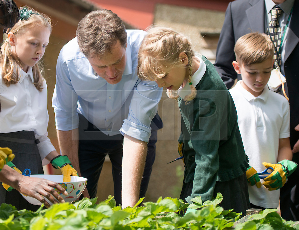 ***EMBARGO 12.01AM Tuesday 17 June.*** © Licensed to London News Pictures. 12/06/2014. Wallington, UK.  Nick Clegg looks at strawberries with the schoolchildren.  Ahead of an announcement on new food standards for schools, Deputy Prime Minister Nick Clegg and celebrity chef Lorraine Pascale visit Foresters Primary School where they picked fruit with schoolchildren from the school's vegetable patch, prepared a fruit salad, helped the school chefs to serve food and sat with the children as they ate lunch. Photo credit : Stephen Simpson/LNP