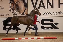 065, Salamander Dwerse Hagen<br /> BWP Hengstenkeuring 2021<br /> © Hippo Foto - Dirk Caremans<br />  11/01/2021