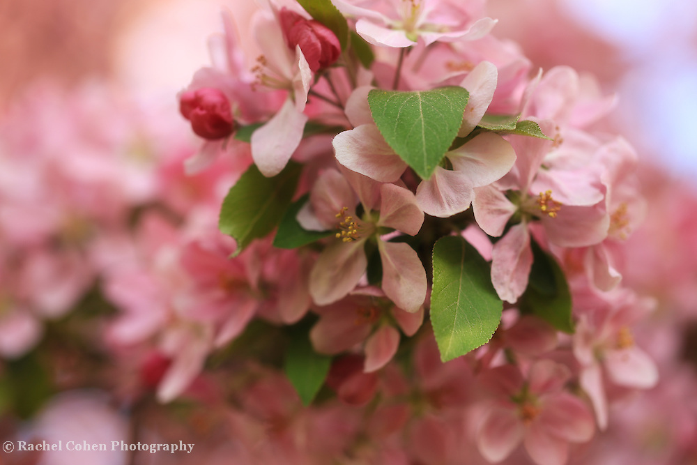 """""""Of Buds and Blossoms"""""""
