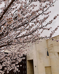 """Rosie Huntington-Whiteley releases a photo on Instagram with the following caption: """"cherry blossom and straight lines \ud83d\udc4d\ud83c\udffc\ud83d\udda4"""". Photo Credit: Instagram *** No USA Distribution *** For Editorial Use Only *** Not to be Published in Books or Photo Books ***  Please note: Fees charged by the agency are for the agency's services only, and do not, nor are they intended to, convey to the user any ownership of Copyright or License in the material. The agency does not claim any ownership including but not limited to Copyright or License in the attached material. By publishing this material you expressly agree to indemnify and to hold the agency and its directors, shareholders and employees harmless from any loss, claims, damages, demands, expenses (including legal fees), or any causes of action or allegation against the agency arising out of or connected in any way with publication of the material."""