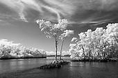 20190728_Florida Everglades