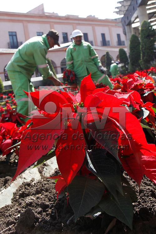 TOLUCA, México.- Trabajadores del ayuntamiento de Toluca comenzaron a plantar la flor de noche buena en las principales plazas de la ciudad, el espíritu navideño comienza a inundar a la capital mexiquense. Agencia MVT / Crisanta Espinosa. (DIGITAL)