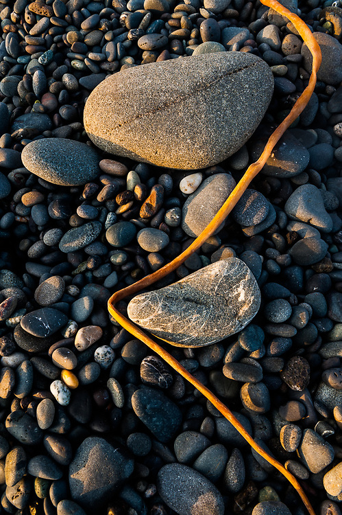 Beach rocks and kelp, afternoon light, June, Second Beach, Olympic National Park, Washington, USA