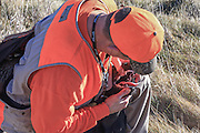 A Pheasant Hunter Examines His Dog in the Field