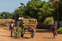 Donkey cart, Omo Valley,  Southern Nations Nationalities and People's Region, Ethiopia.