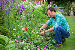 Cutting back perennials in a border that have finished flowering