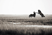 """""""Never let fear of striking out keep you from playing the game"""" ~ Babe Ruth<br /> <br /> Tracie Spence's fine art photography series of The Spanish Wild Mustangs."""