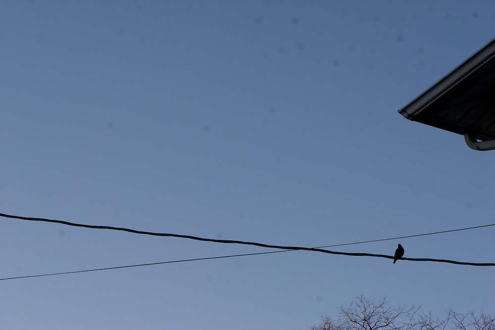 A lone bird sits on a power cable as the roof of its house and the branches of a naked tree sneak their way onto the blue sky background.