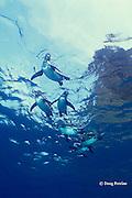 Galapagos penguins, Spheniscus mendiculus, Bartholome Island, Galapagos Islands, Ecuador, ( Eastern Pacific Ocean )