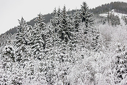 THEMENBILD - Schnee liegt auf den Wipfeln der Tannenbäume, aufgenommen am 13. Dezember 2019, Hinterglemm, Österreich // Snow lies on the tops of the fir trees on 2019/12/13, Hinterglemm, Austria. EXPA Pictures © 2019, PhotoCredit: EXPA/ Stefanie Oberhauser