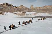 A yak caravan entering the Pamir plateau. Near Bozoi Gumbaz..Trekking to the Little Pamir with yak caravan over the frozen Wakhan river.