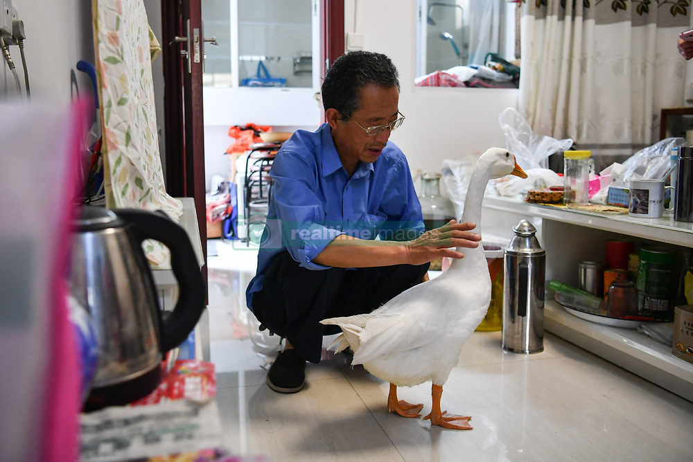 """A pet goose """"Su Su"""" has become a local celebrity as it follows its """"father"""" Jiang Guozhen's family around wherever they go who had been considered as a duckling when been founded several months ago in Kunming,Yunnan,China on 17th July 2017.<br /> <br />  (Photo by Top Photo)"""