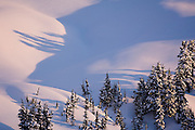 Snow covered trees cast long shadows on bare snow slopes in the early morning light, Garibaldi Provincial Park, British Columbia, Canada.