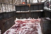 Wies Pietkowo Drugie, woj podlaskie, 12.01.2019. Zbiorowe wielkoobszarowe polowanie na dziki zarzadzone przez ministerstwo srodowiska w zwiazku z epidemia ASF. N/z slady krwi zabitych dzikow na przyczepie - krew byla roznoszona m.in na butach mysliwych co jest sprzeczne z zasadami bioasekuracji fot Michal Kosc / AGENCJA WSCHOD