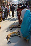 Indian Hindu men and women queue to visit Temple during Festival of Shivaratri in the holy city of Varanasi, India