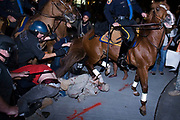 A man representing the anti-war group Iraq Veterans Against the War is stepped on by a police horse during a clash between anti-war demonstrators and Nassau County police, in Hempstead, New York, Wednesday, October 15, 2008.  The roughly 350 demonstrators attempted to enter the Hofstra University campus during the presidential debates and were met with mounted officers and police in riot gear.  Two demonstrators were taken to the hospital after being stepped on by a police horse trying to disperse the crowd.