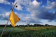 Rice fields near Ubud, Bali, Indonesia.