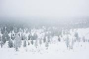 Frosted Air | Saariselkä, Finland
