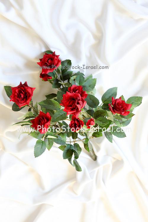 Red Roses Silk flower on white background
