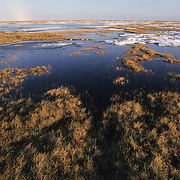 Melting snow creates water on the tundra duriing spring in Barrow, Alaska.