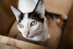 Cat in a box, Fes al Bali medina, Fes, Morocco
