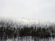 View of the snowy Winter landscape of the forest and fells on the edge of Immeljarvi lake near Levi in Finnish Lapland on 14th February 2018