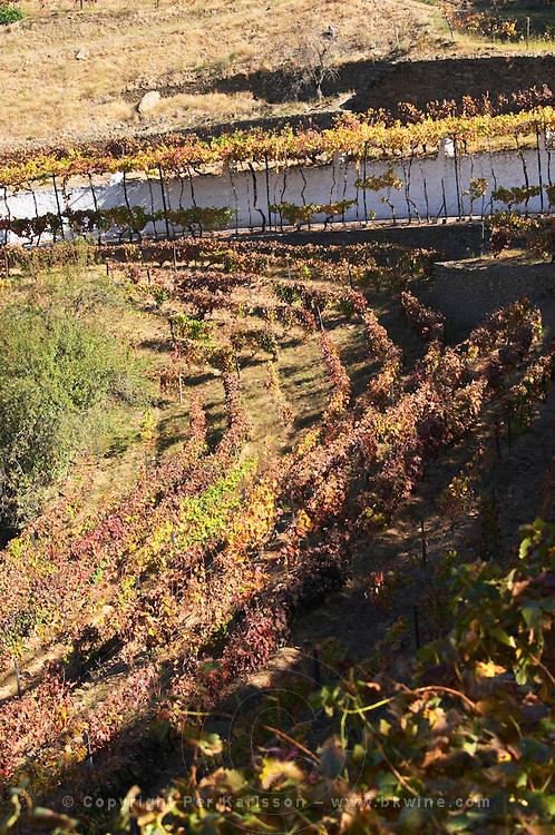 ungrafted nacional vineyards quinta do noval douro portugal
