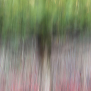 """The Reds Below""<br />