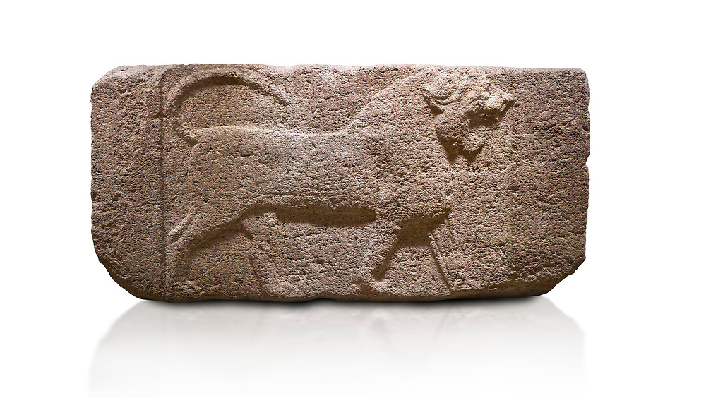 Phygian relief sculpted orthostat stone panel. Andesite, Etimesgut, Ankara. Phrygian. 1200-700 BC. Anatolian Civilisations Museum, Ankara, Turkey.<br /> <br /> Figure of a roaring lion. The cross mark on the chest draws attention. The muscles in his legs are schematic. There are frame edges in front and behind the lion. <br /> <br /> Against a white background. .<br /> <br /> If you prefer you can also buy from our ALAMY PHOTO LIBRARY  Collection visit : https://www.alamy.com/portfolio/paul-williams-funkystock/phrygian-antiquities.html  - Type into the LOWER SEARCH WITHIN GALLERY box to refine search by adding background colour, place, museum etc<br /> <br /> Visit our CLASSICAL WORLD PHOTO COLLECTIONS for more photos to download or buy as wall art prints https://funkystock.photoshelter.com/gallery-collection/Classical-Era-Historic-Sites-Archaeological-Sites-Pictures-Images/C0000g4bSGiDL9rw