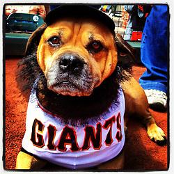 Dog day at the ballpark,  2012