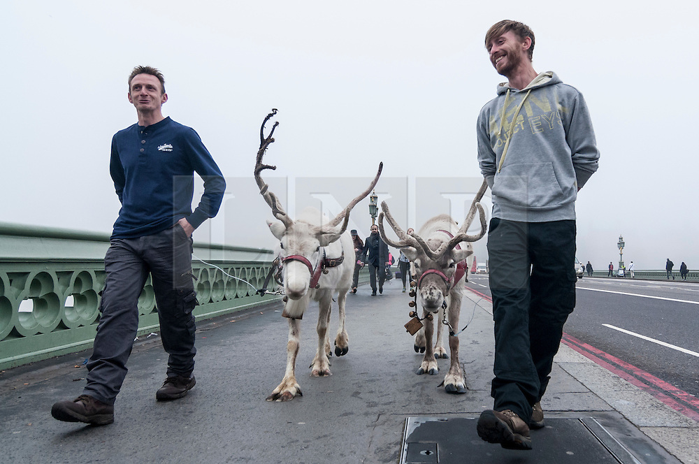 "© Licensed to London News Pictures. 02/11/2015. London, UK. Commuters arriving for work are met by reindeer being walked on a foggy Westminster Bridge.  The event was to promote the DVD/Blu Ray release of a film called ""Get Santa"", just in time for Christmas. Photo credit : Stephen Chung/LNP"