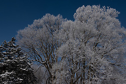 If weather conditions are just right, Rime Ice will form on tree branches in the winter creating a beautiful photo opportunity