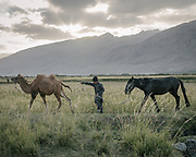 Boy taking care of a Horse and Bactrian camel. The traditional life of the Wakhi people, in the Wakhan corridor, amongst the Pamir mountains.