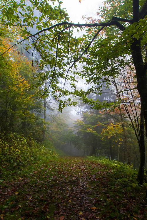 GATLINBURG, TN - OCTOBER 11: Images from Smoky Mountain National Park in Gatlinburg, TN. Newfound Gap, Cades Cove