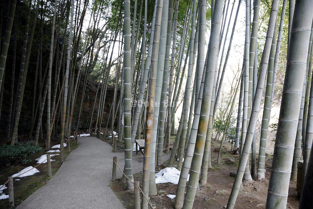 bamboo garden Kamakura Japan