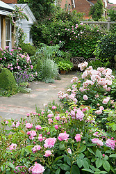 Terrace with Rosa 'Ispahan' to left and R. 'Felicia' and 'Ispahan' to right. Design: Ran Lall