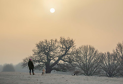 © Licensed to London News Pictures. 21/01/2020. London, UK. Walkers enjoy the rising sun through the misty and heavy frost this morning in Richmond Park as forecasters predict a milder week ahead. Photo credit: Alex Lentati/LNP
