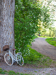 THEMENBILD - ein Fahrrad lehnt an einem Baumstamm vor einem Waldweg, aufgenommen am 28. April 2018, Kaprun, Österreich // a bicycle leans against a tree trunk in front of a forest road on 2018/04/28, Kaprun, Austria. EXPA Pictures © 2018, PhotoCredit: EXPA/ Stefanie Oberhauser