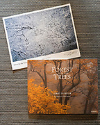 Forest for the Trees book with Print #4