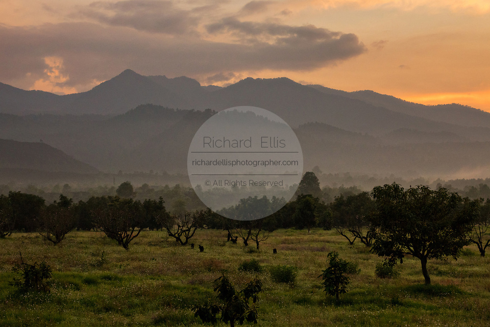 Sunset over avocado groves growing under the Tierra Caliente mountains in the Purepecha highlands near San Juan Parangaricutiro, Michoacan, Mexico. This region is the largest growers of avocados in the world.